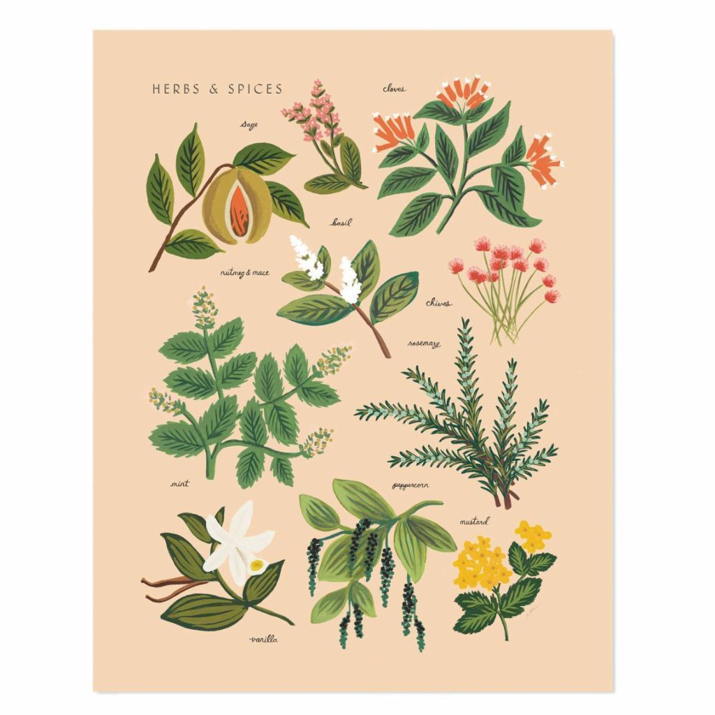 Herbs and Spices Peach Art Print by Rifle Paper Co