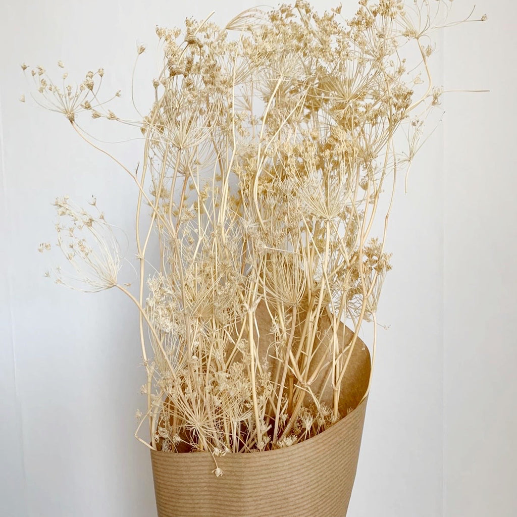 ** Bunch of Dried, Bleached Umbels