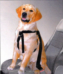 Large / X-Large Adjustable Combo Harness