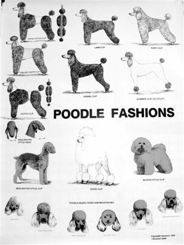 Poodle Fashions Poster