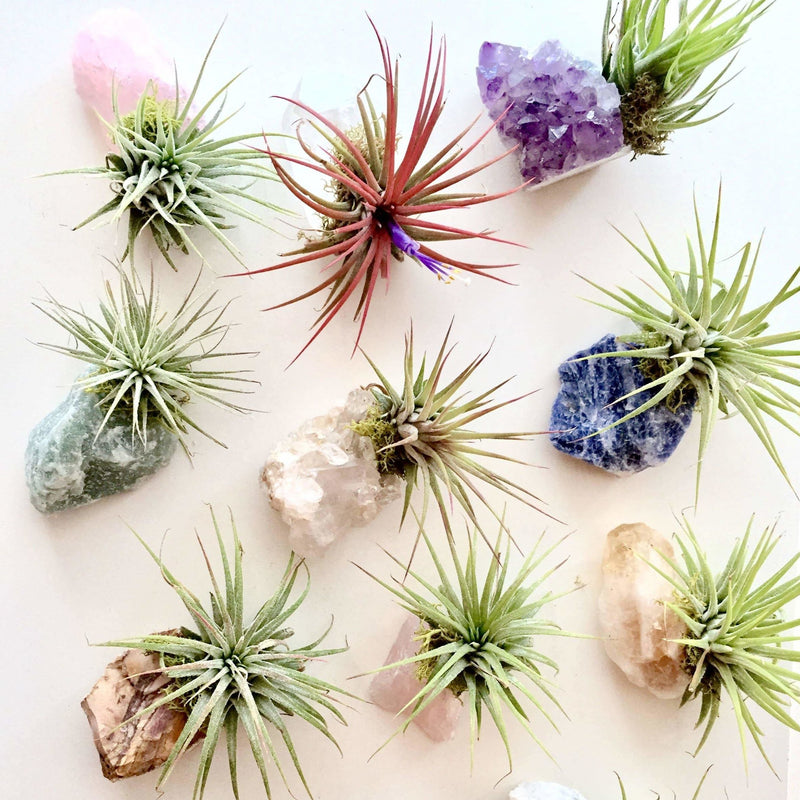 Sea Gypsy California - Crystal Air Plants l Zen Garden