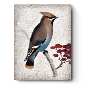Waxwing T485