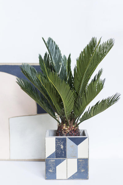 Graphic Plant Pot