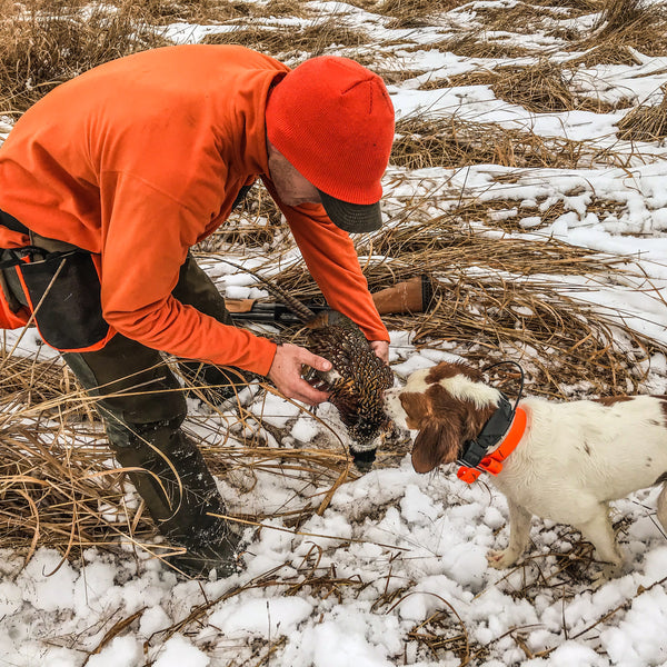 Bird Dog Retrieve Training Tip... Change Up Your Training Objects!