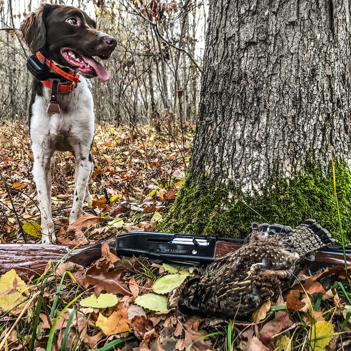 A November Day Spent Ruffed Grouse Hunting in Northern Michigan