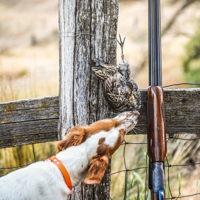 Time, Birds and Faith - The Making of a Great Bird Dog