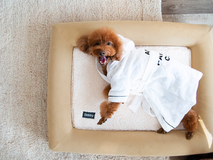 5 Ways To Keep Your Dog Comfortable This Winter.