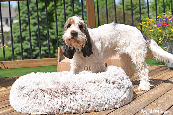 COMFY, COZY, CALMING DOG DONUT BED - Review