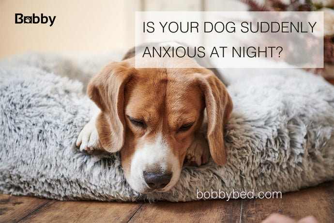 Is Your Dog Suddenly Anxious at Night