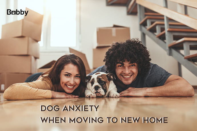 Dog Anxiety Moving to New Home - Some Effective Coping Strategies