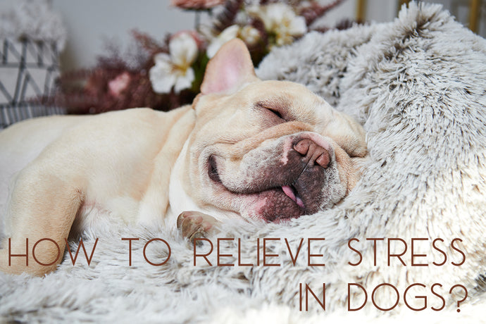 How to Relieve Stress in Dogs