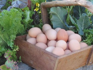 12 Free Range Organic Eggs (laid fresh this week)