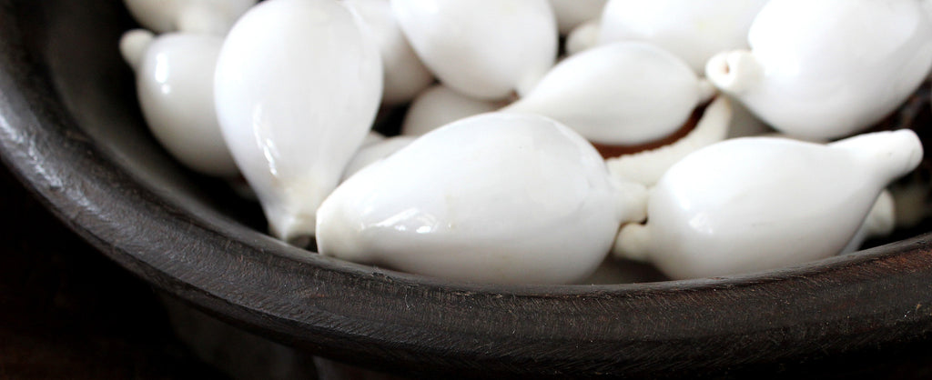 White cowrie shells