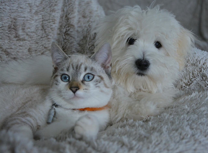 Tips for Raising Cats and Dogs Together