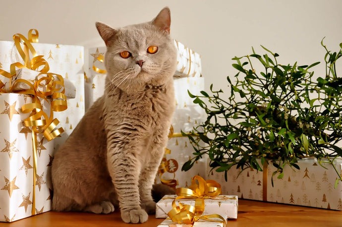 5 Cute Christmas Gifts for Cat Lovers