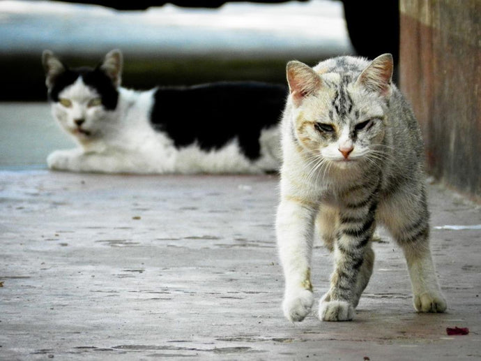 60% of Stray Cats Can't Survive Harsh Winters