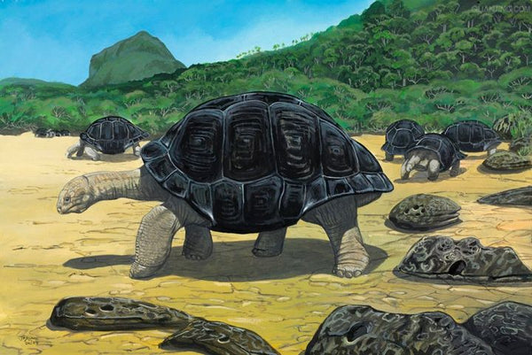 6.Domed Mauritius giant tortoise