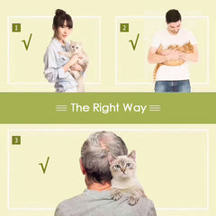 the correct way to hug a cat