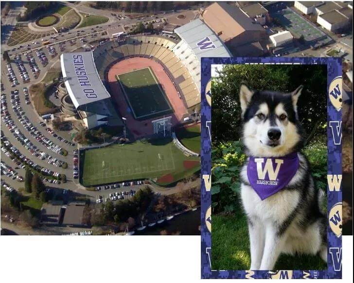 The mascot of the university of washington is also a huskies