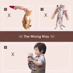 the wrong way to hug a cat
