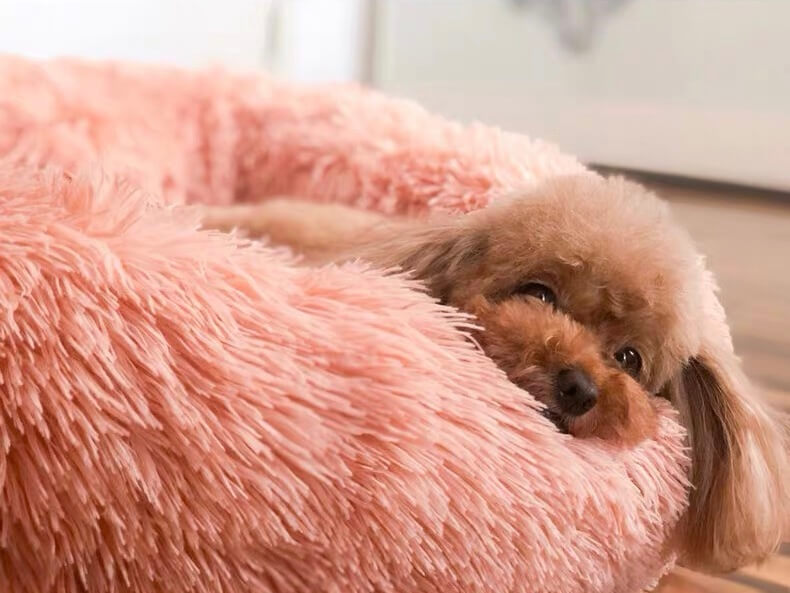 Calming bed for dogs soothing dog bed