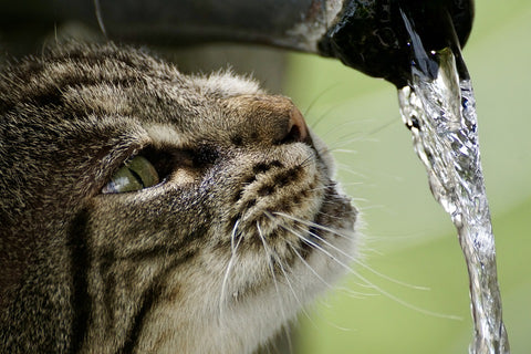 cat drinking ruining water