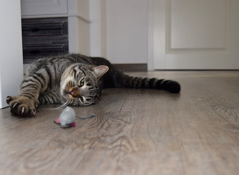 cat play with cat toy rat on the floor