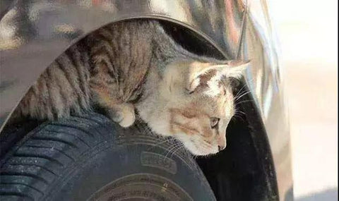 cat hide in wheel