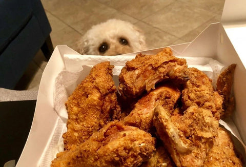 dog looking at fried chicken