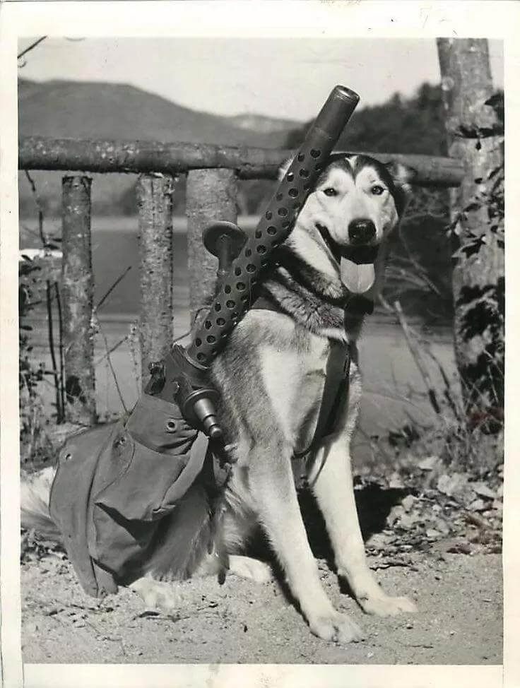 Husky helping soldiers to carry machine guns