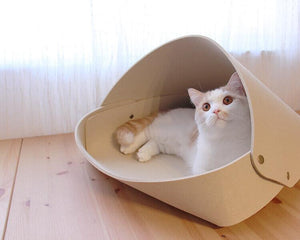 cat igloo bed british short hair