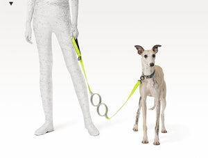 Pidan dog leash shock-absorbing dog leash