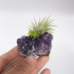 AMETHYST CRYSTAL & PLANT - Home &GIft