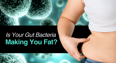 gut bacteria and fat