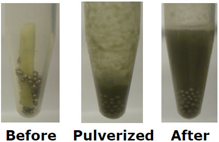Before and after of horseradish root homoegnized in the Bullet Blender