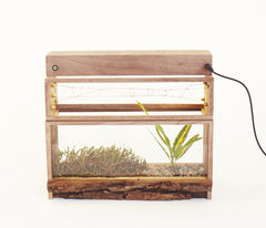 MINI 1 - Glass Terrarium - Edition 00