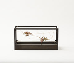 COPPER Patina Air Terrarium