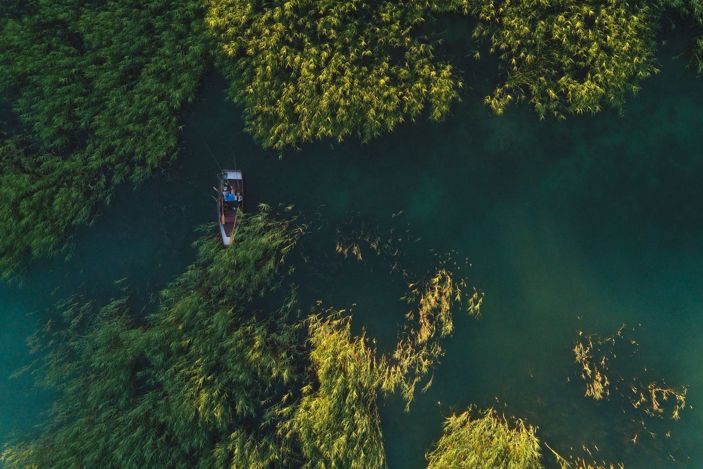 Aerial view of river and green forest