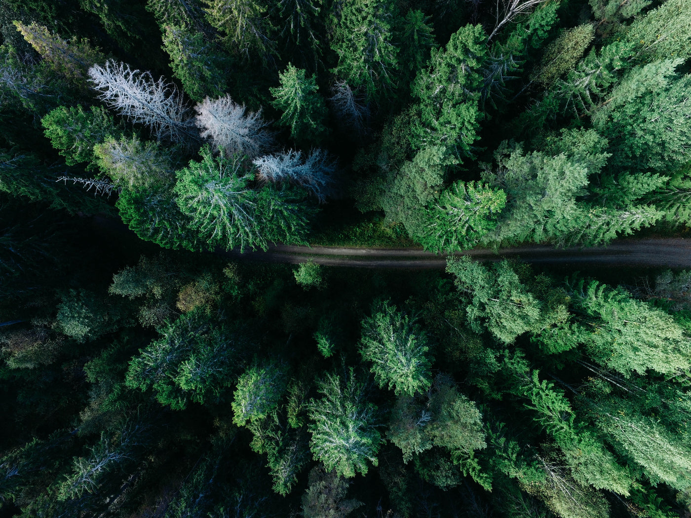 Aerial photography of forest with pine trees