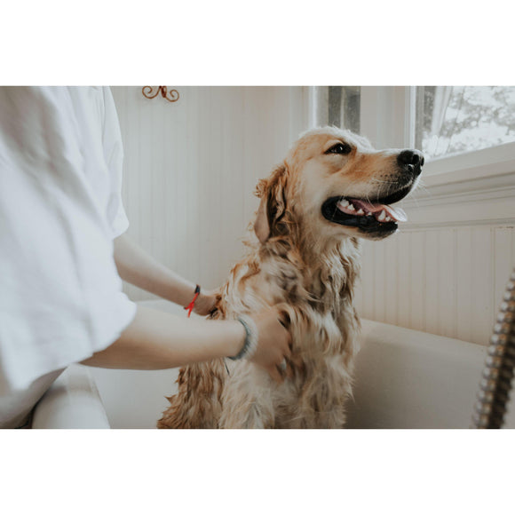 Senior Dog Grooming Tips