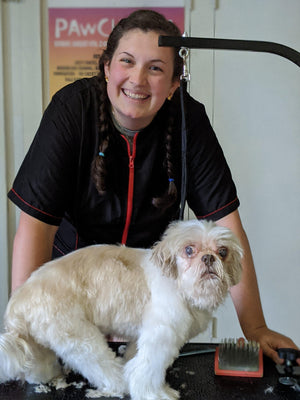 What to look for in a Senior Dog Groomer