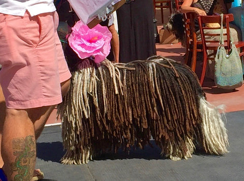 Laguna Beach Pet Parade 2016
