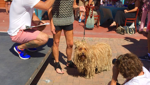 Laguna Beach Pet Parade