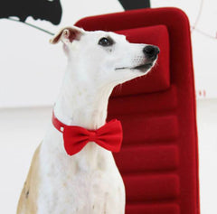 Red dog collars