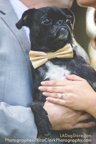 Dog bow tie, Country rustic wedding