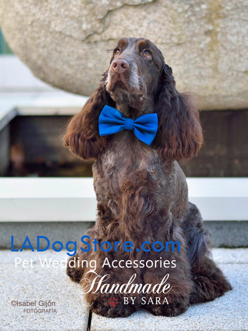 Royal blue dog bow tie