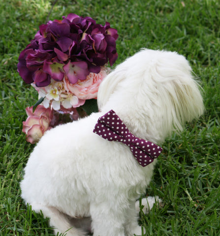 Raspberry Polka dots Dog Bow tie attach to collar, Raspberry wedding ideas , Wedding dog collar