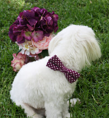 Raspberry Polka dots Dog Bow tie attach to dog collar, Raspberry pet wedding accessory,  dog collar, Pet Lovers, Cute, Unique gift idea - LA Dog Store  - 1