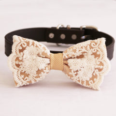 Champagne lace bow tie dog collar  girl collar, M to XXL Collar, dog of honor ring bearer, Handmade adjustable collar