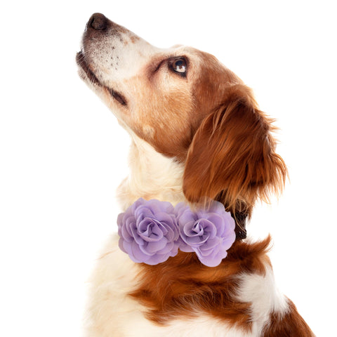 Lavender Flower dog collar, Handmade flower leather collar, Dog of honor proposal XS to XXL collar, Puppy Girl flower collar , Wedding dog collar